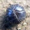ダンゴムシの左目