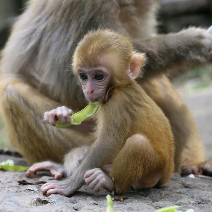 Anna LI -monkeyspi