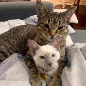 spoiledcitycats