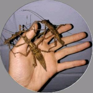 basti_ant_nature